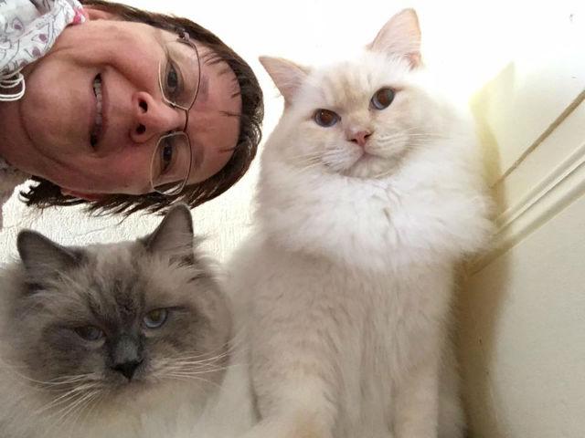 selfies ragdolls Ulyssiade Miyazaki Lucky