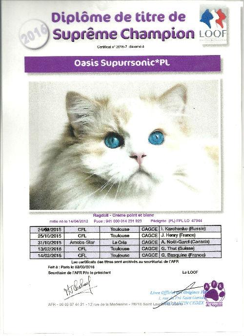 Ragdoll Suprême Champion Oasis