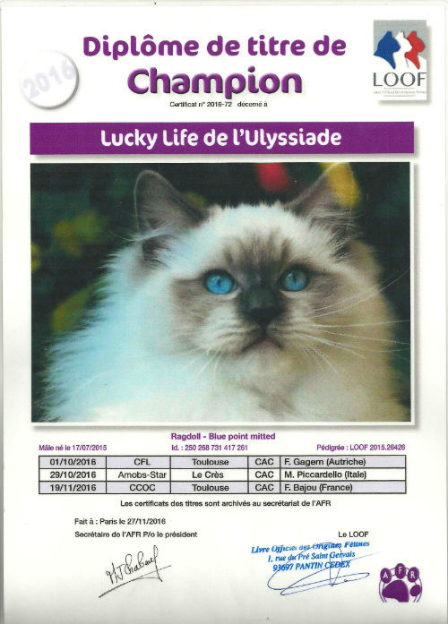 Titre Champion Loof Lucky Life, ragdoll