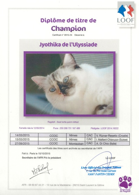 Champion ragdoll Jyothika de l`Ulyssiade seal tortie point mitted